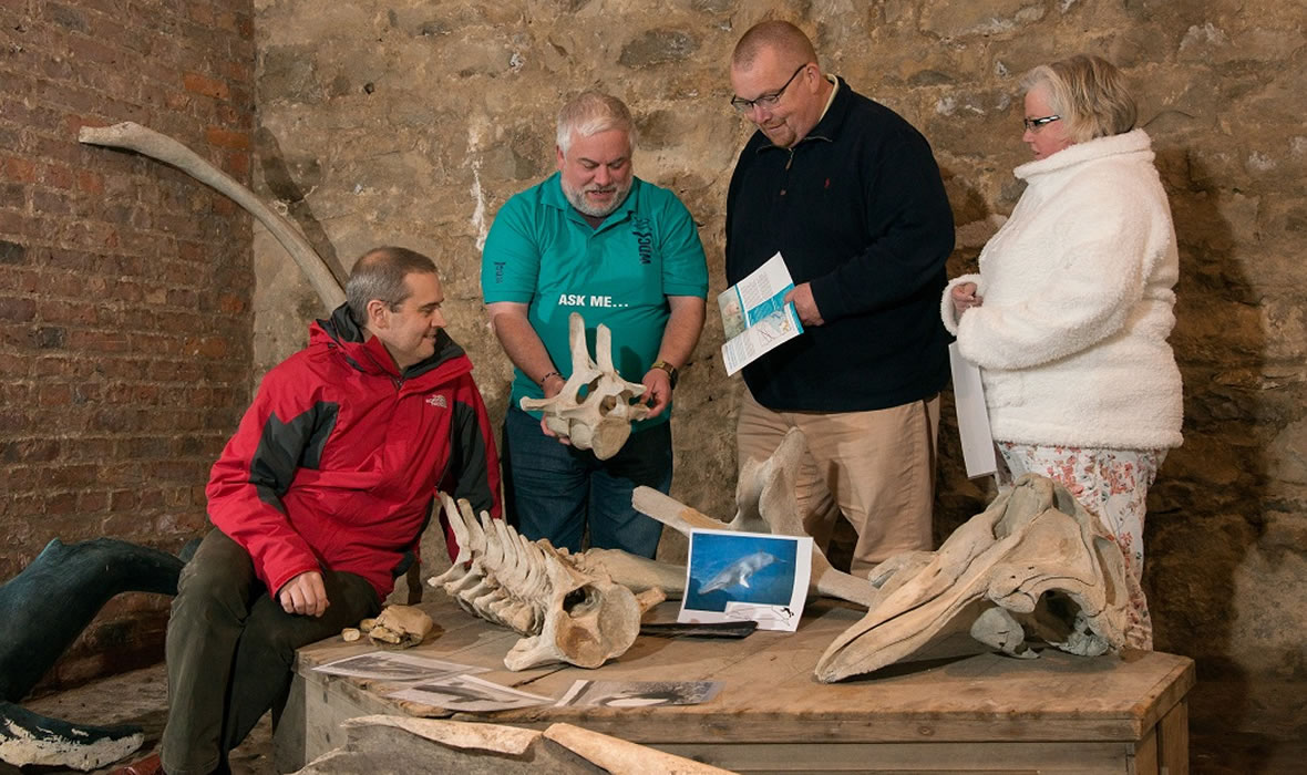 Whale and dolphin skeletons at the Ice House, Scottish Dolphin Centre. Photo © Alex Mitchell
