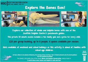 Bones box tour